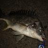 魚の夜間撮影