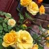 ほっこり。玄関には季節の「お花」がたくさん。熱海ココだけ。朝方までライトアップ。まったり「民泊」宿。