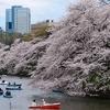 さくらの日におすすめ!田町のお花見スポット3選