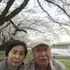 5月1日(月)弘前城へ見事な花筏に逢えるかな
