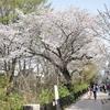 2018 年の桜