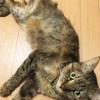 餌を変えたら猫の嘔吐と下痢が治った話
