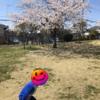コロナだが今年も桜は満開だった🌸