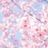 関西近郊でお花見ができるおすすめキャンプ場の紹介(兵庫編)