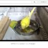 【動画】感動するほど使える!!YouTubeの動画再生ページをカスタマイズできるChromeのアドオン「YouTube Options」が超おすすめ!