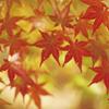 「紅葉」を歌う!