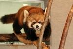 曇天の円山動物園へ。天気は悪くても動物たちは生き生きしていました。