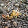 ジャガイモの芽出しが始まりました