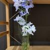 【花を活ける】#1 爽やかな水色「デルフィニウム」