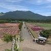 どこでもGO 山中湖花の都公園 単なる花畑ではなかった!コスモス一杯!やる事いっぱい!