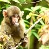 【自然環境調査員】生き物・自然・環境情報発信ブログを始めます!