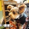 松本市のワンコの集い場💛【FANGLE CAFE】犬連れOK☆彡