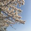 Dongree Camp Market in 雲ヶ畑へ出町柳から花見ランしながら行く。