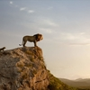 「ライオン・キング」フルCGのミュージカル野生動物映画