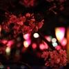 目黒川の桜から「夜景の撮り方」を振り返る