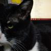 猫は飼い主に似る
