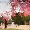 仙台クロニクル「大町頭(おおまちがしら)」②桜ケ岡公園(西公園)