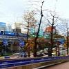 横浜公園の秋
