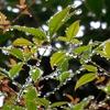 雨が続くので苔が・・・追記 : 入江聖奈「ヒキガエルスポットに行ってきました」さっそくカエル探しの旅へ