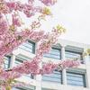 第80回 桜花賞◆◆重賞1点予想◆◆