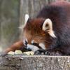 GWも八木山動物公園で癒される