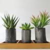 水やり不要の多肉植物【飾り竹炭】を買ったらインテリアとして超優秀だった