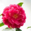 デジタル加工の有無を問わない:花のフォトコンテスト