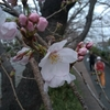 Spring has come to Tokyo.