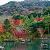 🍁嵐電でゆく京都紅葉・嵐山🍂