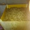 堆肥とか挿し木とか 晴 16-4