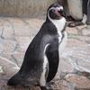 江戸川区自然動物園のペンギン