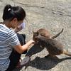 マリーバで野生のワラビーとふれあい体験