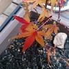 10cmの紅葉