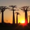 幻想的なバオバブの並木道が美しいモロンダバ(マダガスカル) 絶景広がるバオバブ街道の魅力
