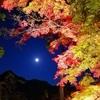 秩父・長瀞で紅葉を堪能してきたよ!【月の石もみじ公園編】