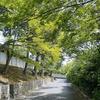 新緑の時期の京都観光 いい季節です。