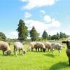「マザー牧場」でたくさんの動物に出会える!マザー牧場ならではの体験も!