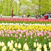 〔ニートひとり旅の思い出〕アムステルダムで何を思う?