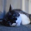 我輩は猫である。名前はまだ(分から)ない。