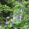 写真が上手くなりたい📷📸 愛知県森林公園/植物園で修行中!