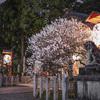 長岡天満宮で夜の梅をちょっとだけ@2021