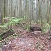 高松沢の穴 ケイビング