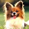 【インスタグラム】超可愛い!芸能人の飼っている犬専用アカウント4選!おすすめをまとめたよ!