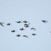 佐賀の干潟に鳥を見に行った。よ。(2020 0904)