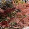 平和公園の紅葉を楽しむ