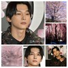 吉沢亮と桜🌸~花言葉はSpiritual beauty