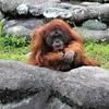 浜松動物園・浜名湖:ぬくもりの森