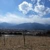 ワインブドウ園