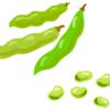 食で感じる春。究極に簡単な調理法でそら豆を堪能しました。