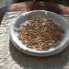 小麦の芽とセンテラの苗